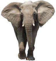 3250.Elephant_8_2_11